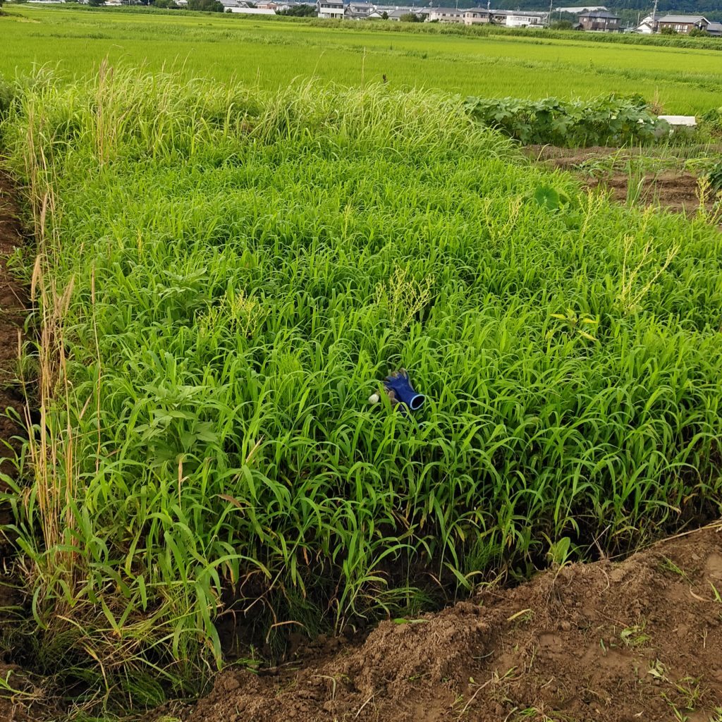 雑草クライシス~先人に学ぶ雑草対策~