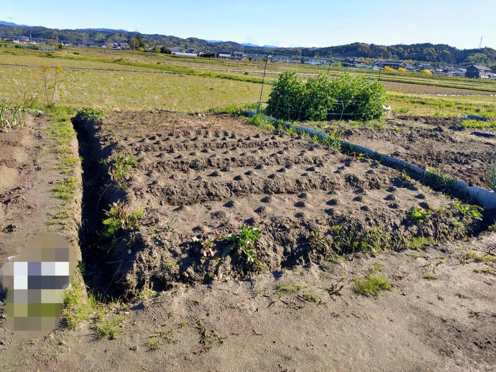 畑の開拓 畝作り