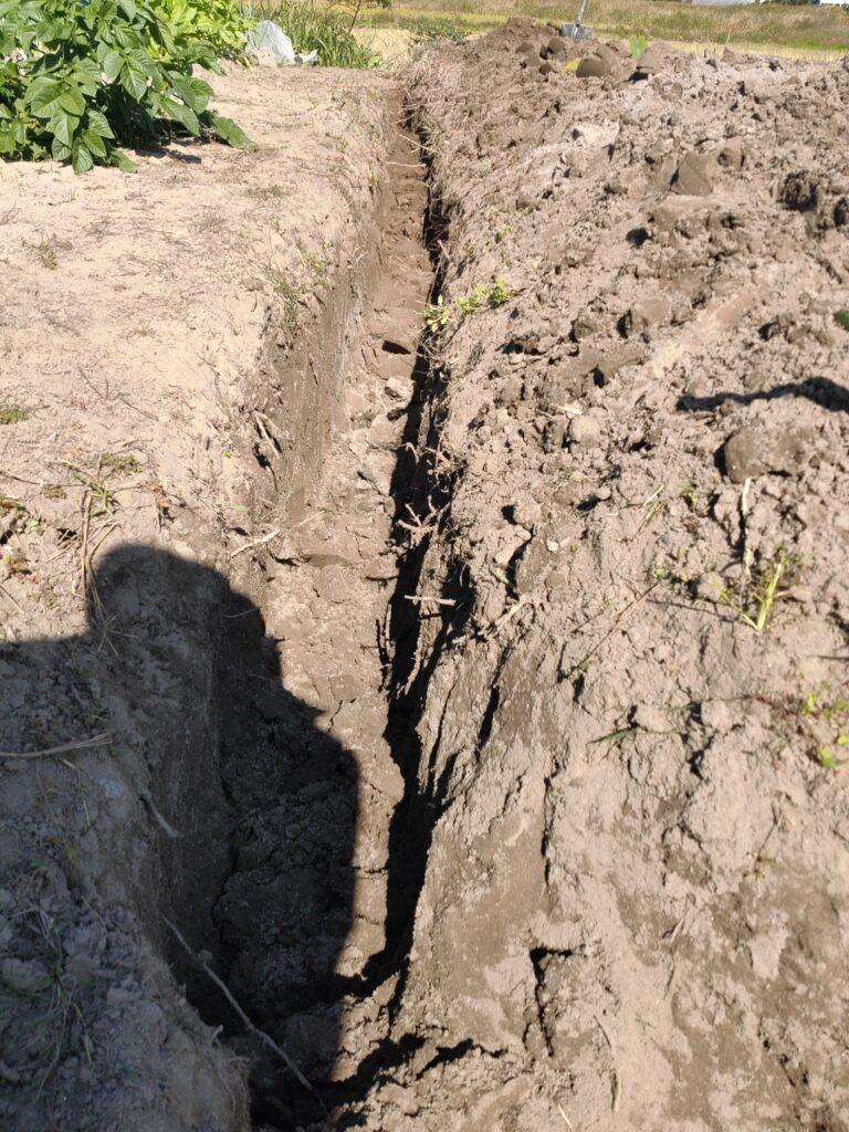 畑の開拓2020fall④畝作り