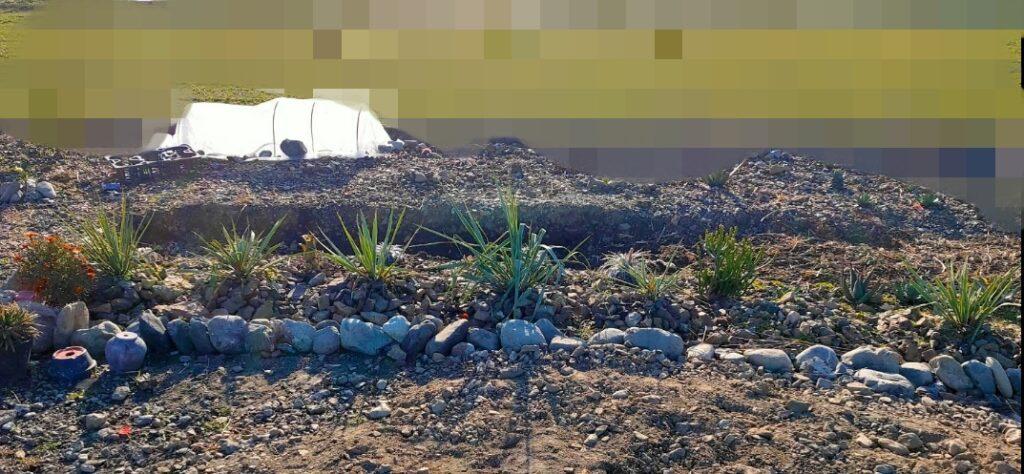 冬場の地植え畑