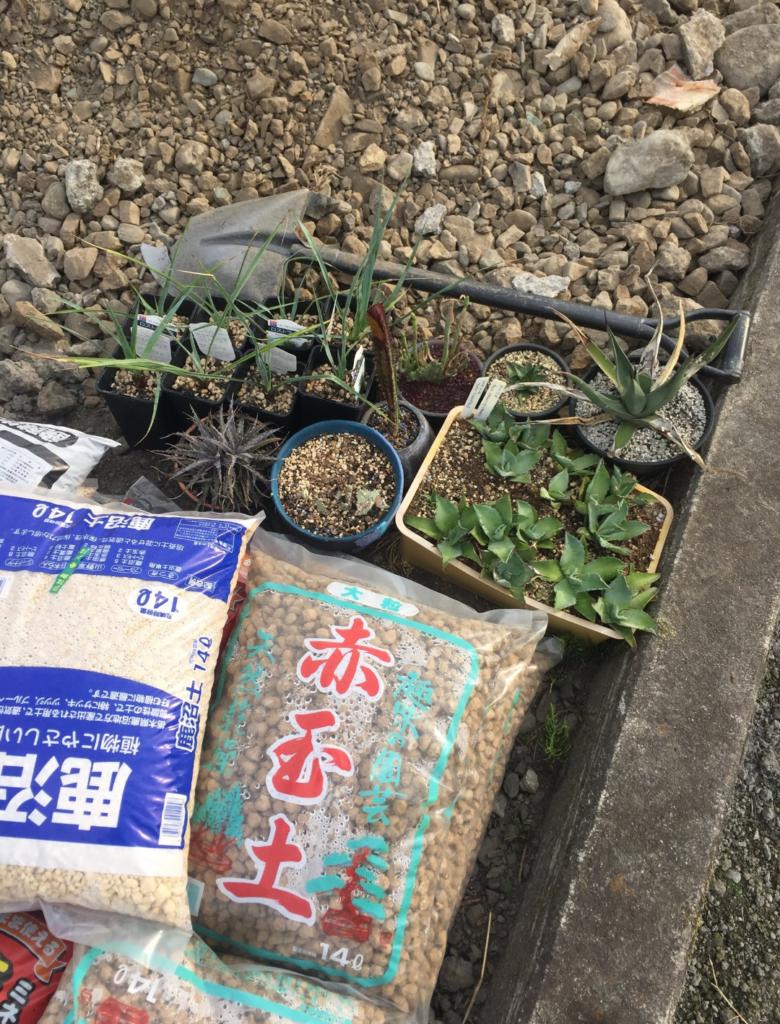 植え込みを控える植物たち