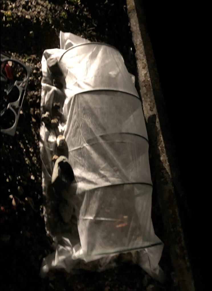 不織布のトンネル掛け
