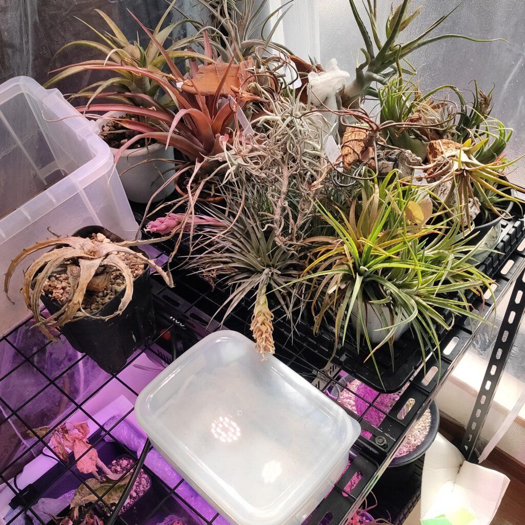 室内温室の窓際第2陣へ設置