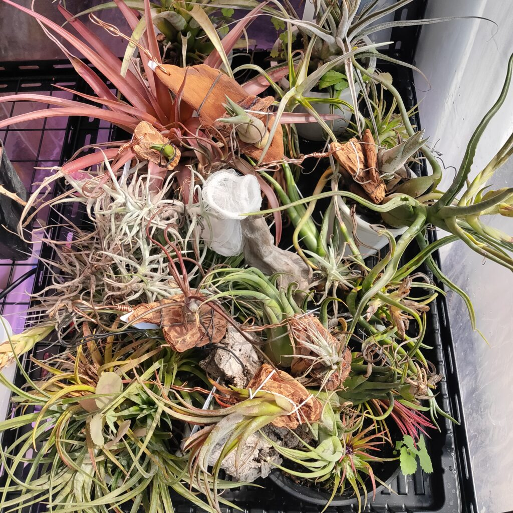 室内温室の様子。 ゲロのような無秩序さで限界は近いです。