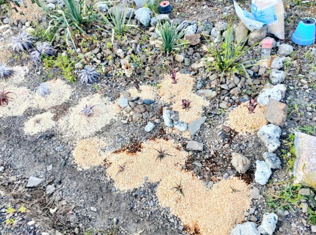 畑に植物を植えこみました。春の植え込み祭り