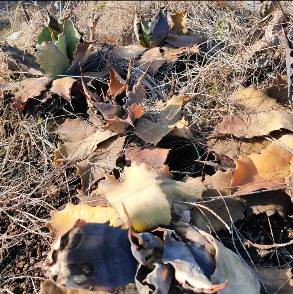 【地植え便り】冬越しの代償