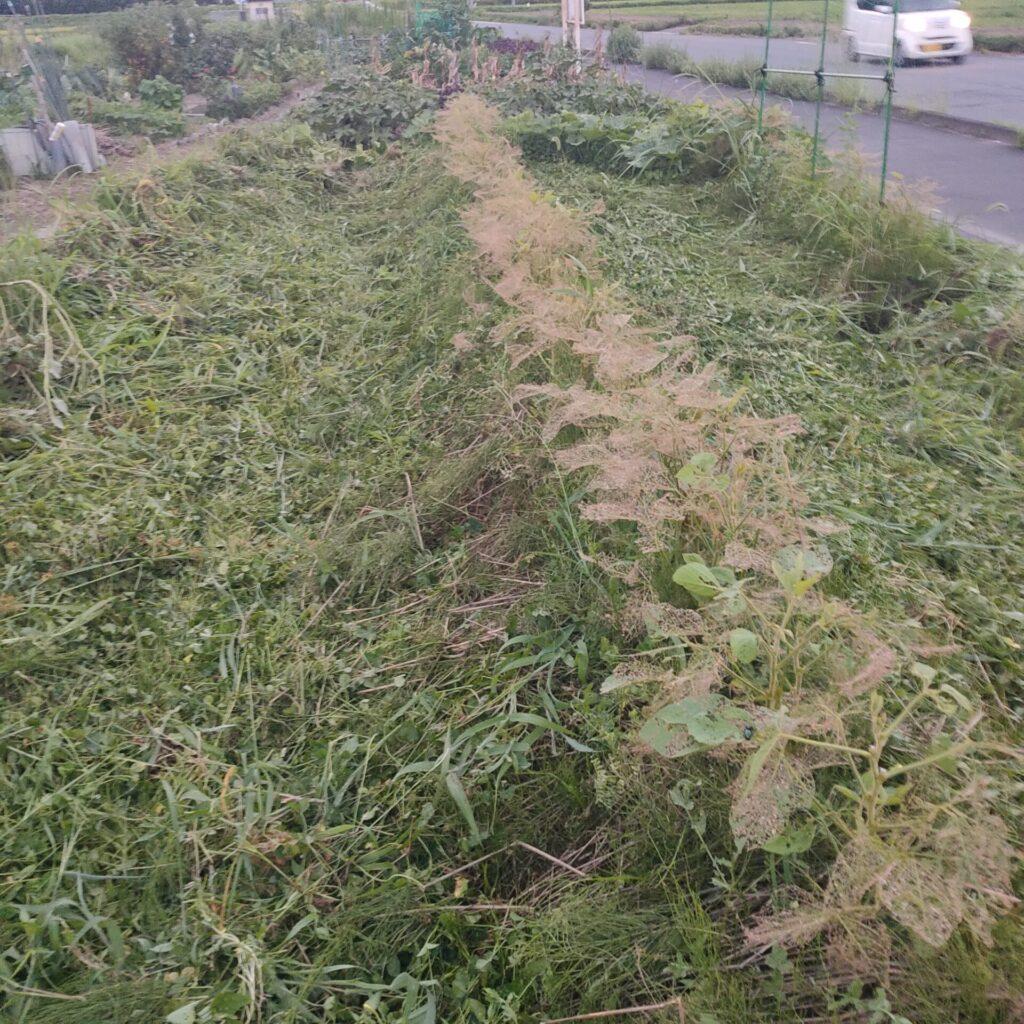 市民農園 無肥料 無農薬栽培 害虫被害